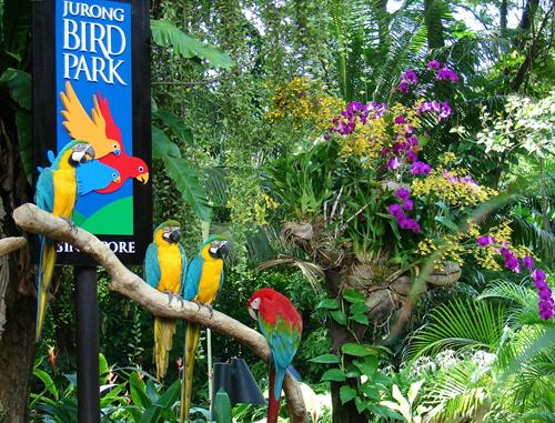 Singapore Jurong BIrd Park 2