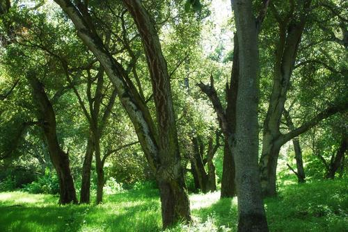 external image Forests%201.jpg