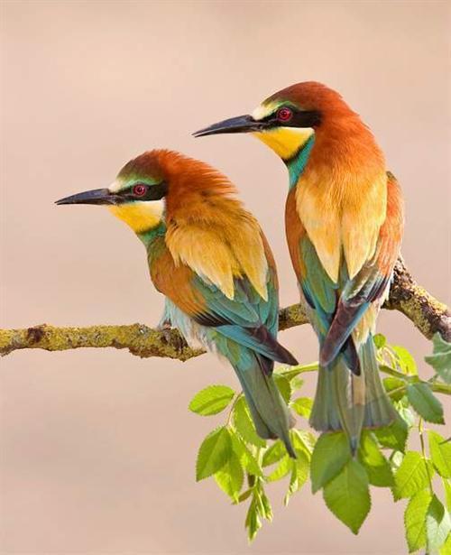 رومانسية bird1.jpg
