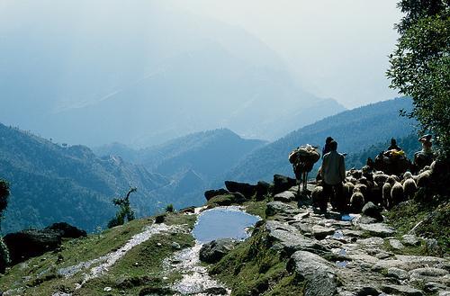 Trekking to Pindari Glacier