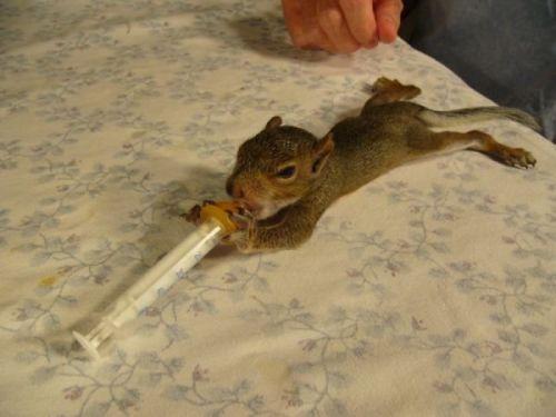 Cute squirrel baby 1  ...